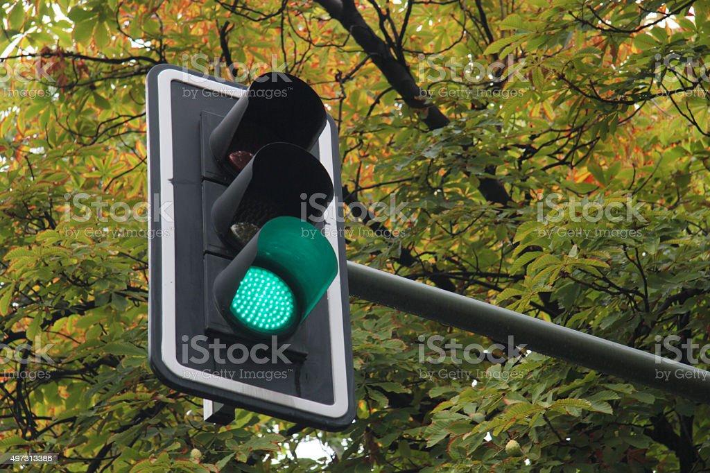 traffic light in green stock photo