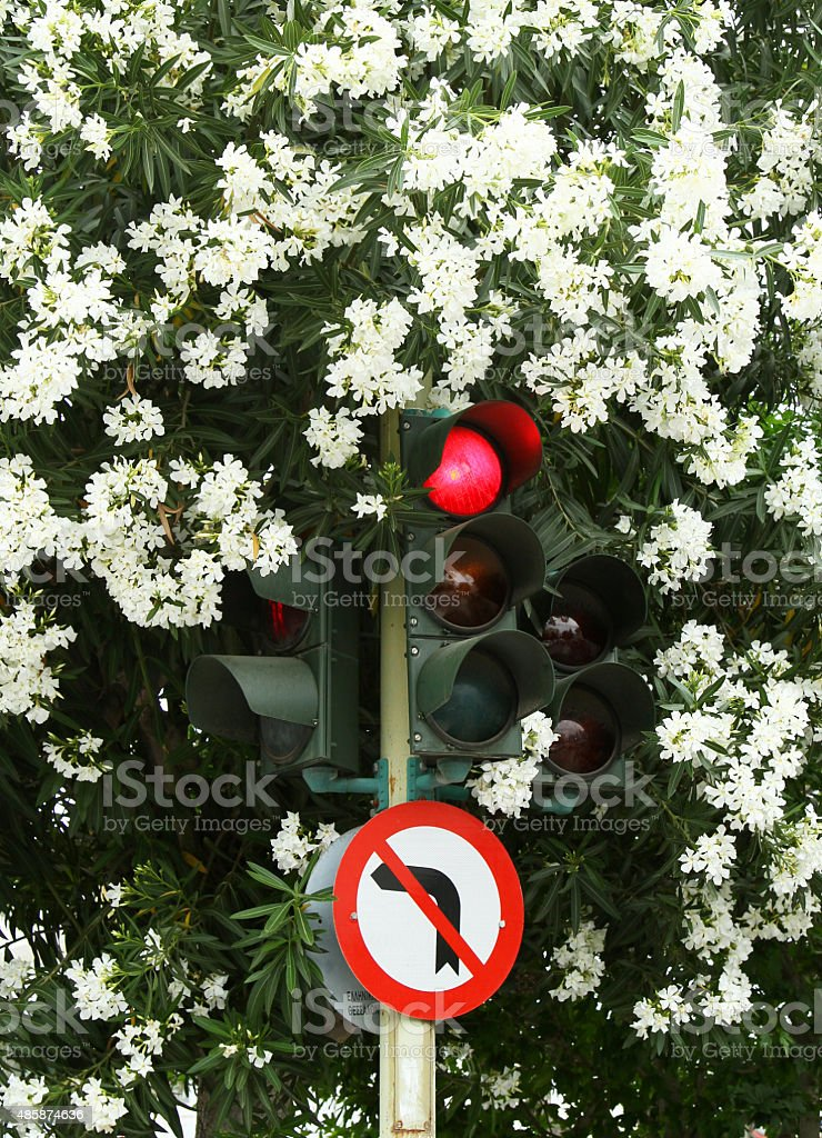 traffic light in the bushes stock photo