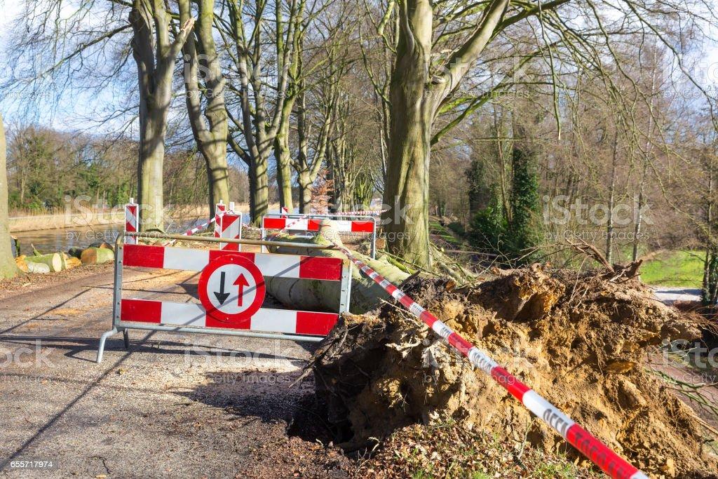Traffic problems traffic signs storm damage fallen tree stock photo