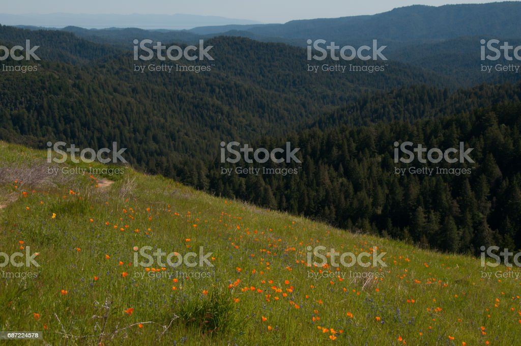 Trail along poppy strewn hillside leads hikers to view of mountains and Monterey Bay. stock photo
