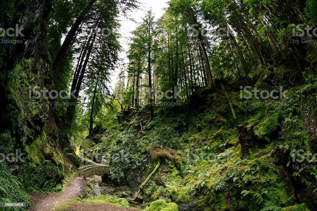 Trail by a river through a green Scottish forest stock photo