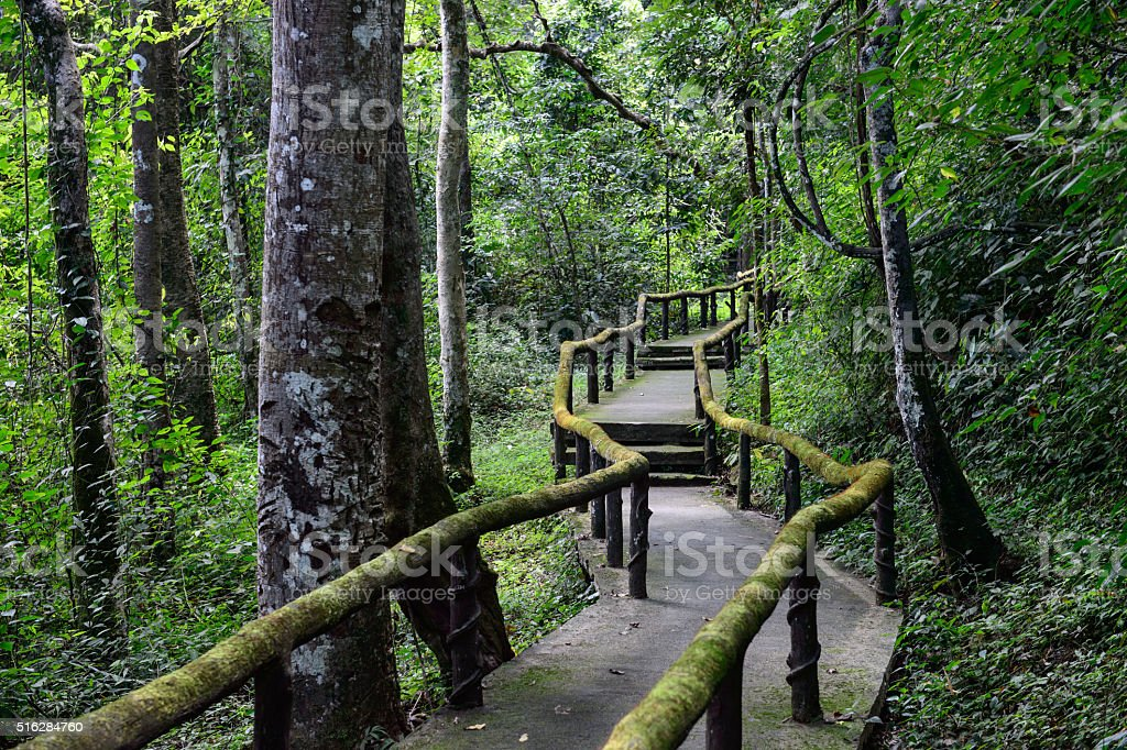 Trail for walking to learn the nature in tropical forest stock photo