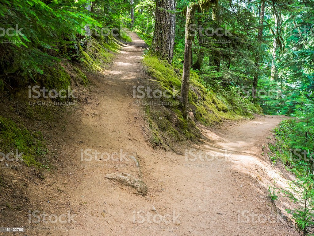 Trail Fork Uphill Downhill Oregon by McKenzie River Highway 126 stock photo