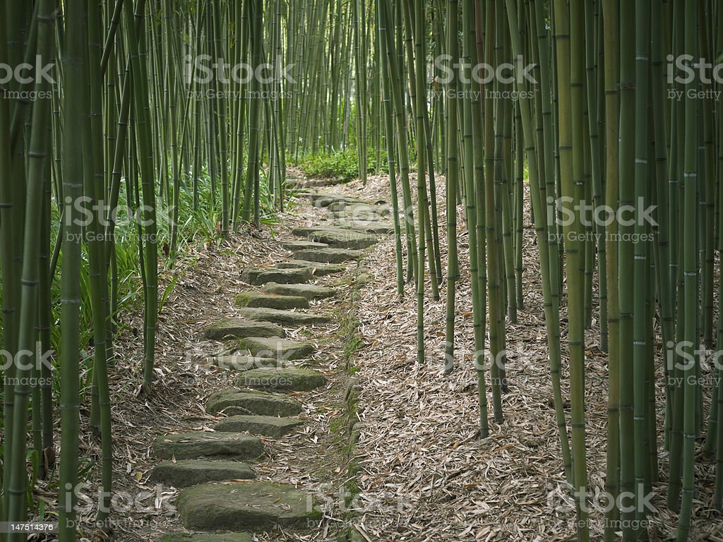 Trail in a Japanese Bamboo Forest stock photo