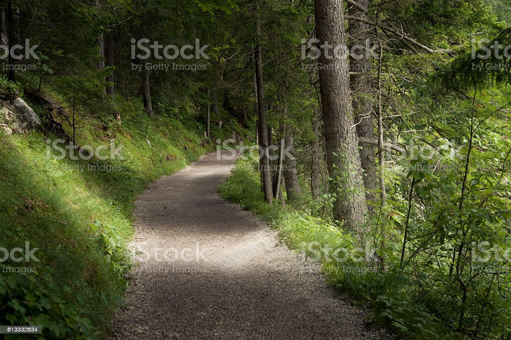 Trail in forest stock photo