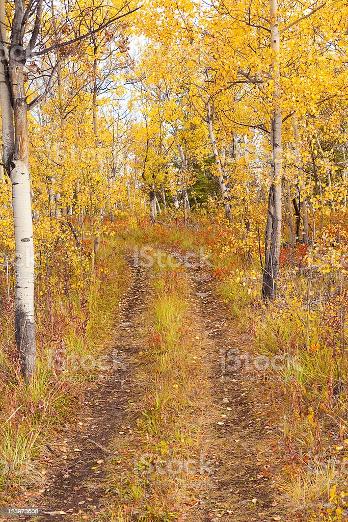Trail in Golden Aspen Forest royalty-free stock photo