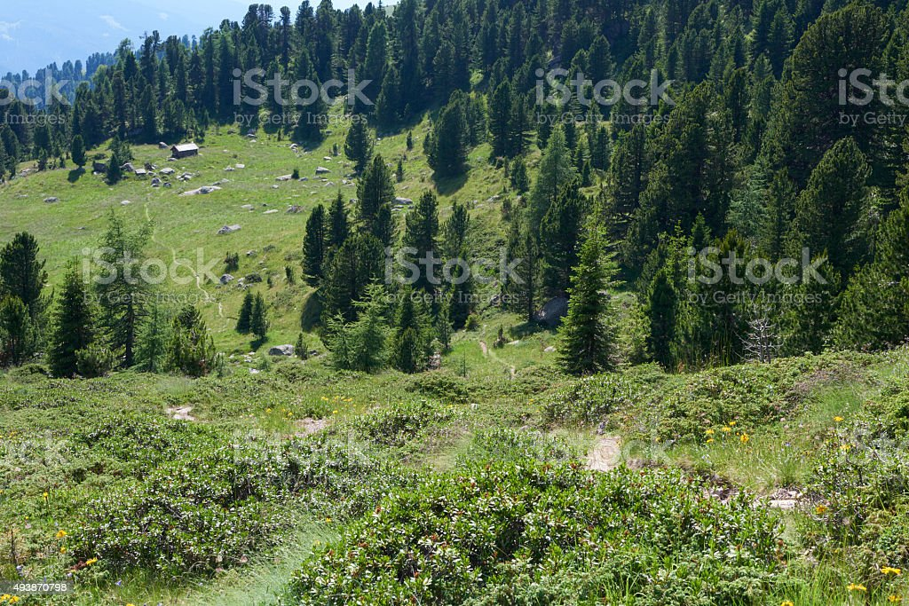 Trail In The Dolomites stock photo