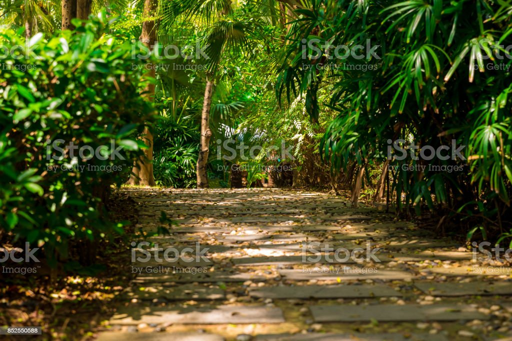 Trail in the tropical jungle in the afternoon. Tropic in the park. Stone road in forest stock photo