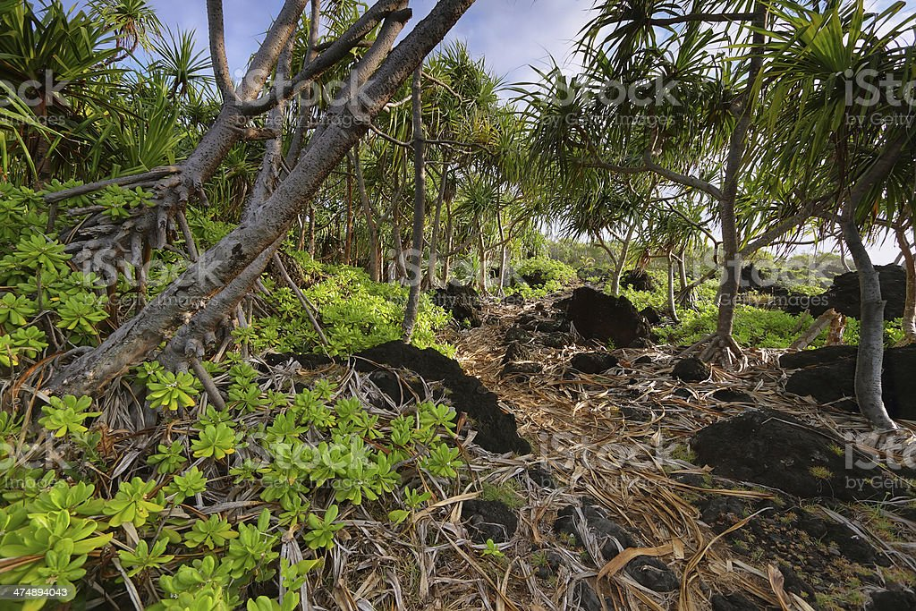 Trail in Waianapanapa State park stock photo
