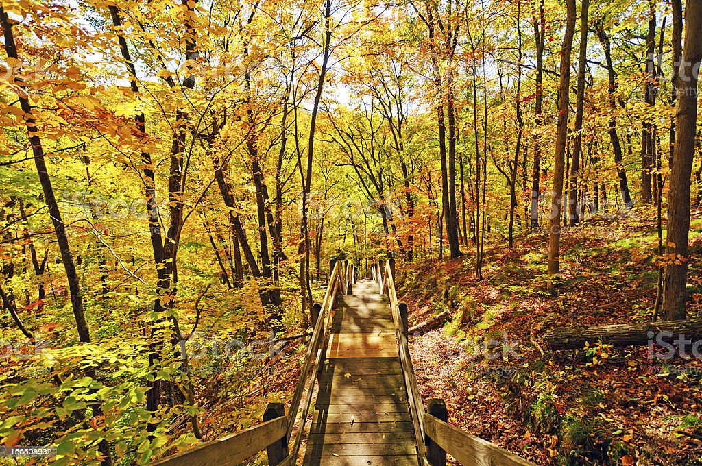 Trail into the Fall Forest stock photo