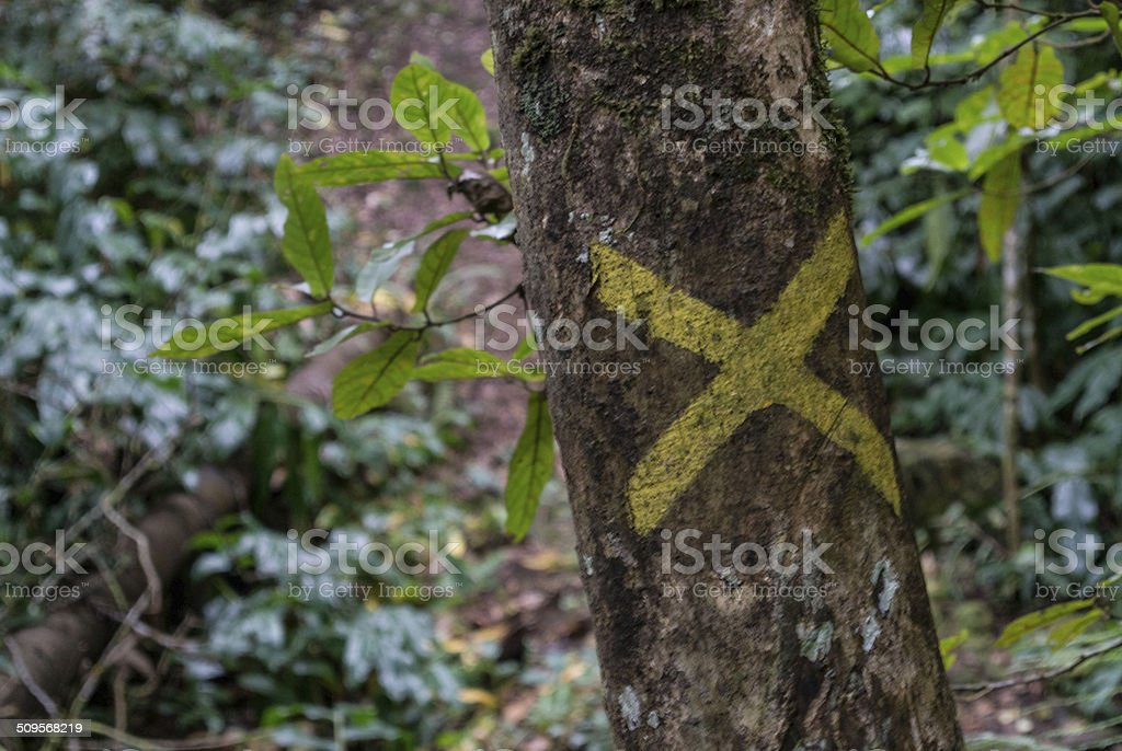 Trail Marker, Forest stock photo