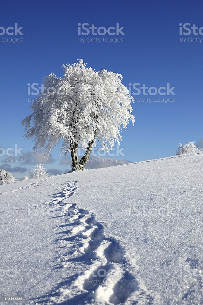 trail of footprints in snow royalty-free stock photo
