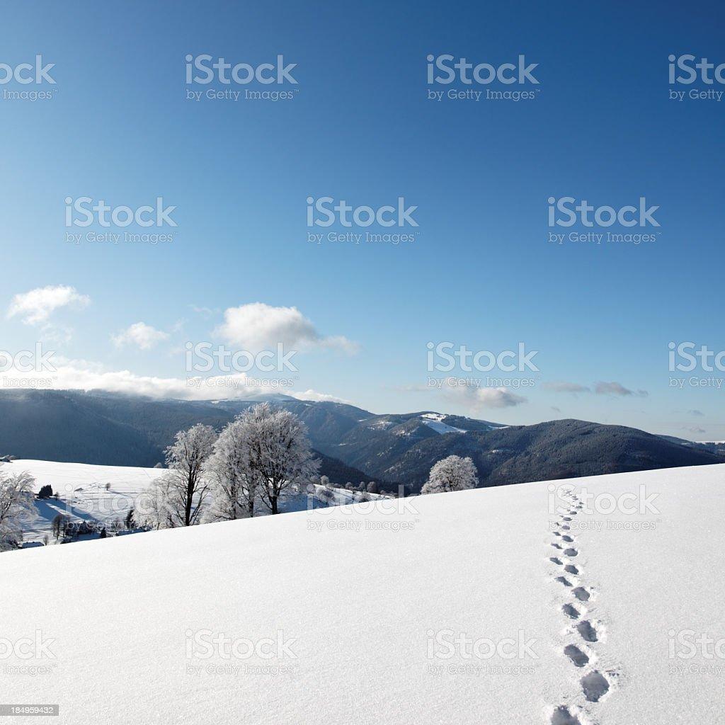 Trail of footprints walking in snow stock photo