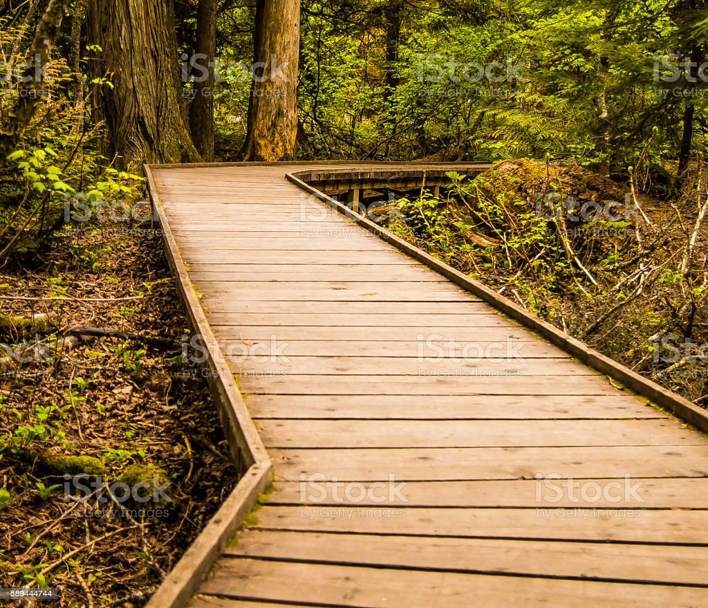 Trail of the Cedars in Glacier National Park stock photo