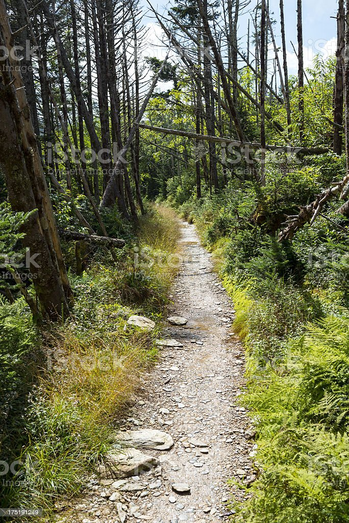 Trail on Mt. LeConte in Great Smoky Mountains National Park stock photo