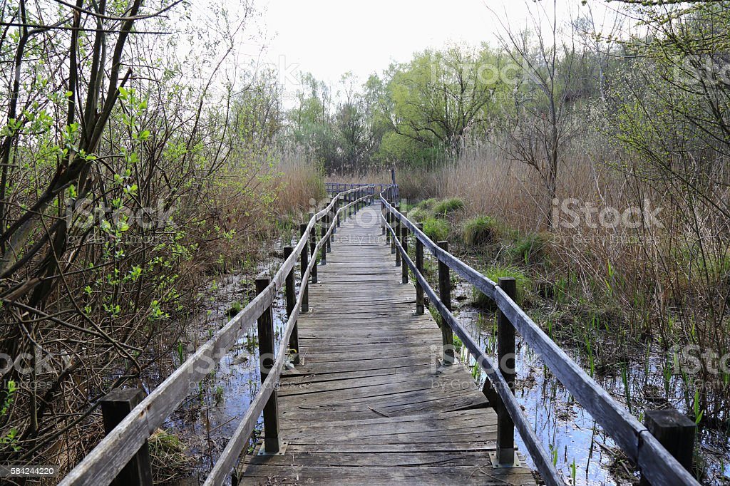 Trail or walkway in the swamp stock photo