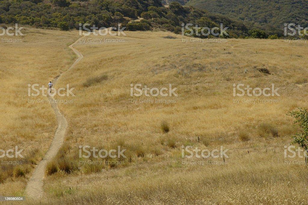 Trail runner in golden field III stock photo