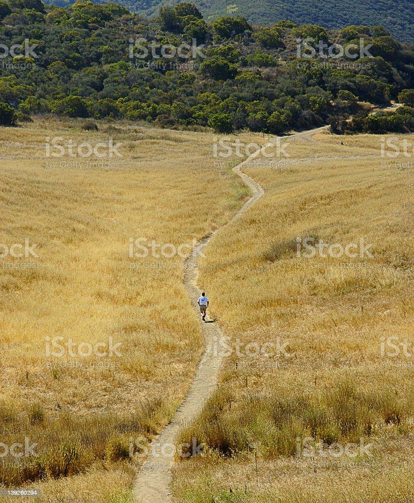 Trail runner in yellow field stock photo