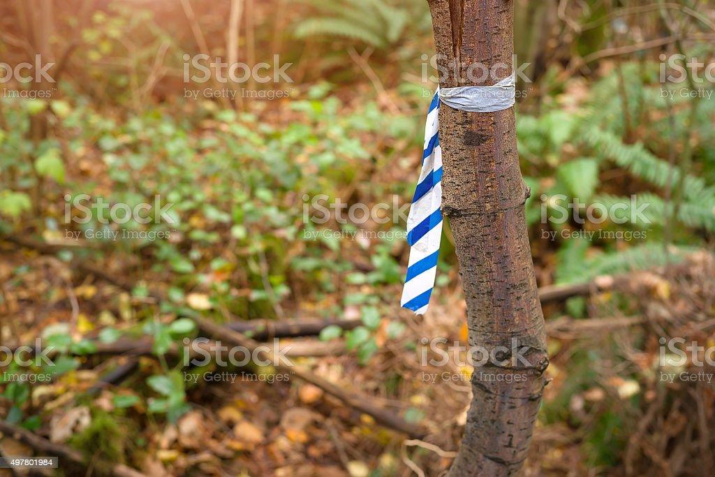 trail strip on tree stock photo