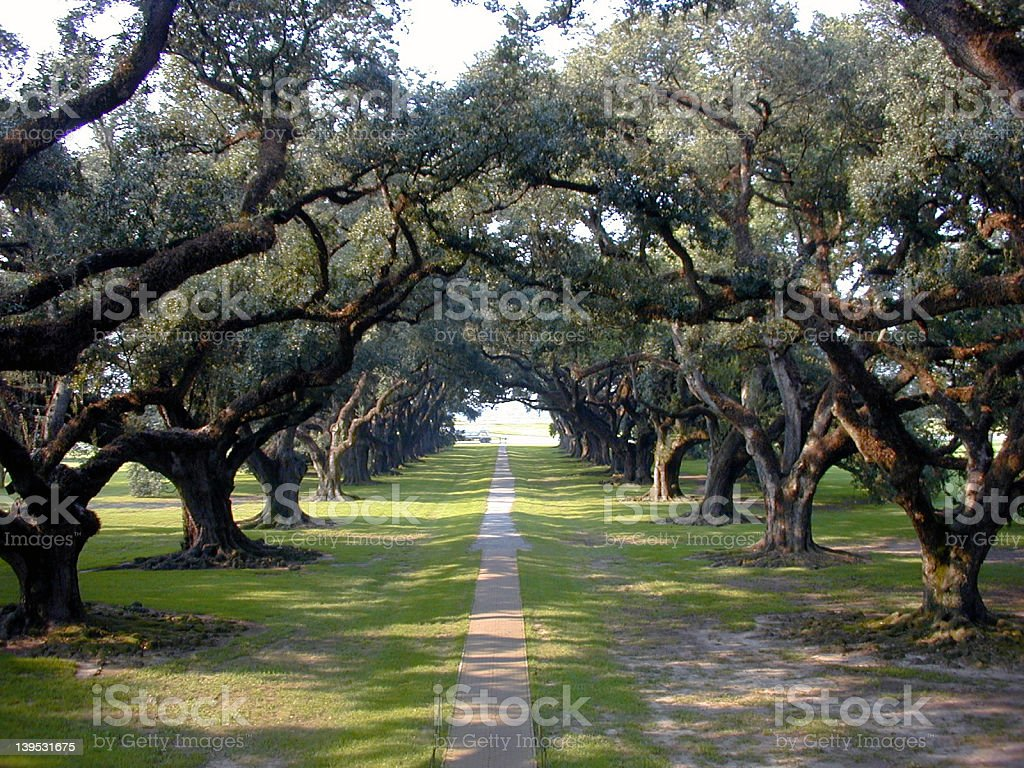 Trail surrounded by oak trees  stock photo