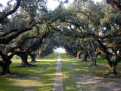 Trail surrounded by oak trees