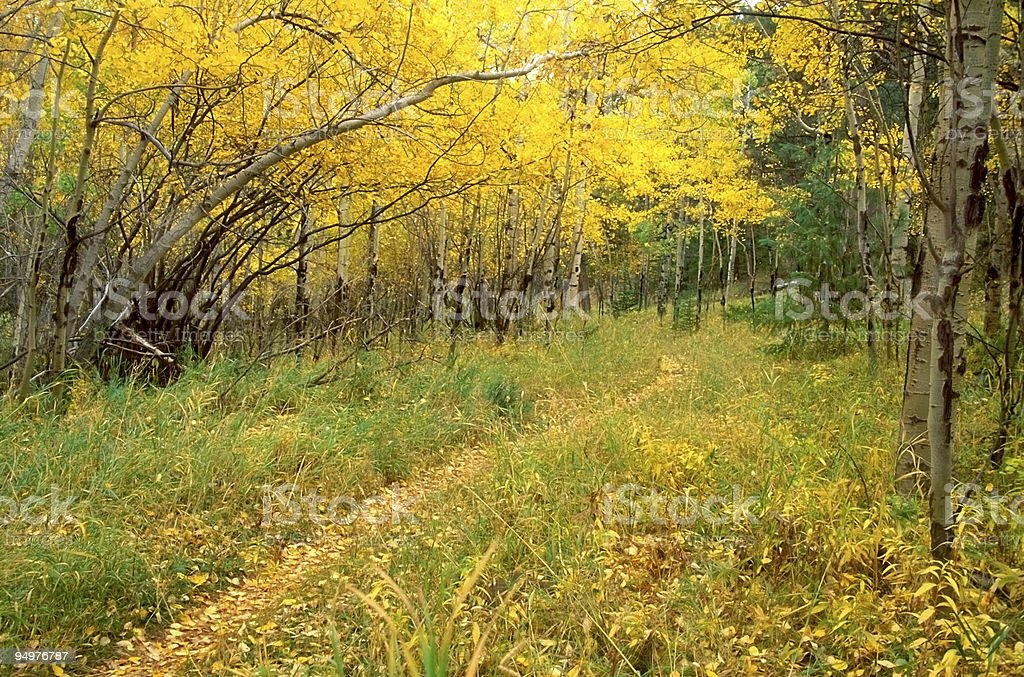 Trail Through a Golden Forest stock photo
