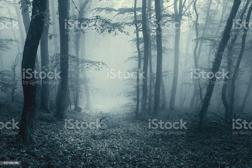 Trail through a magic forest in fog with vintage toning stock photo