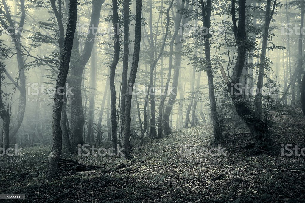 Trail through a mysterious dark forest in spring stock photo
