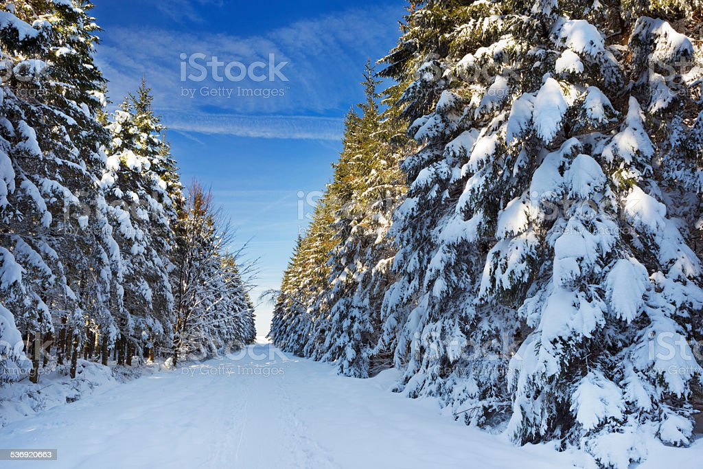 Trail through beautiful winter forest on a clear day stock photo