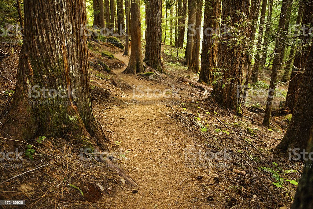 Trail through forest royalty-free stock photo