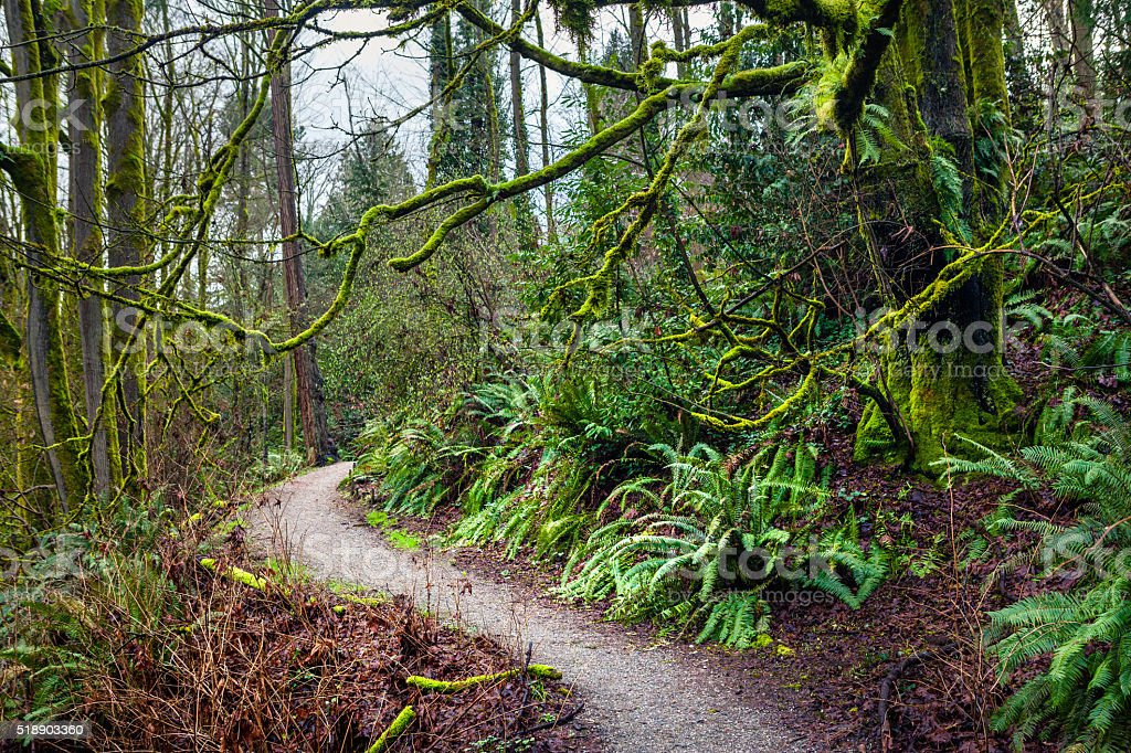 Trail Through Lush Greenery Of Forested Ravenna Park royalty-free stock photo