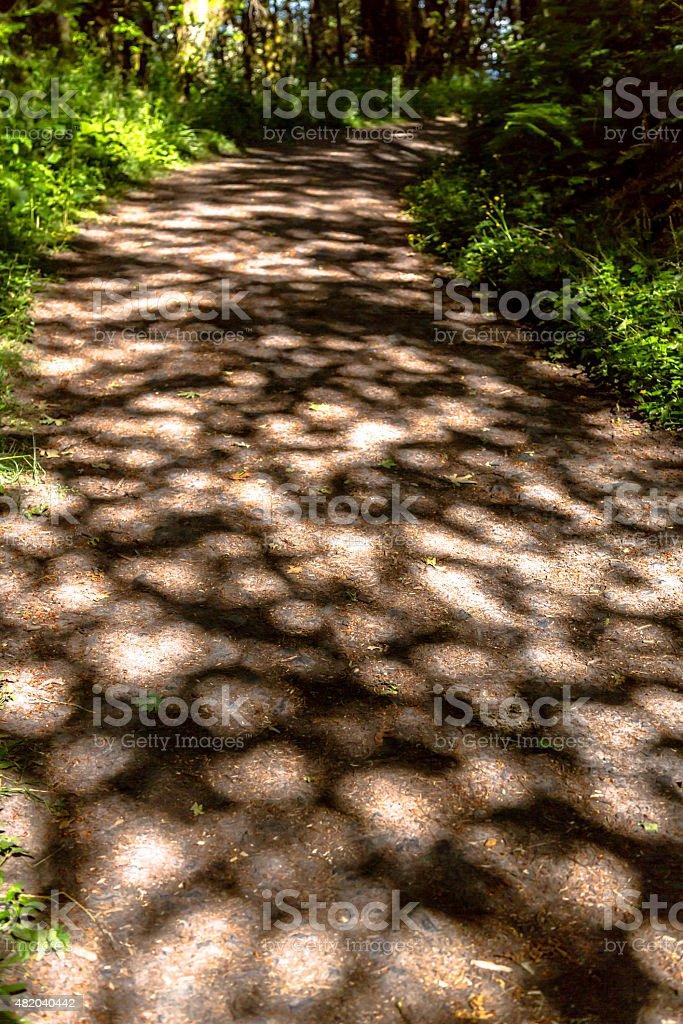 Trail Through Rainforest stock photo