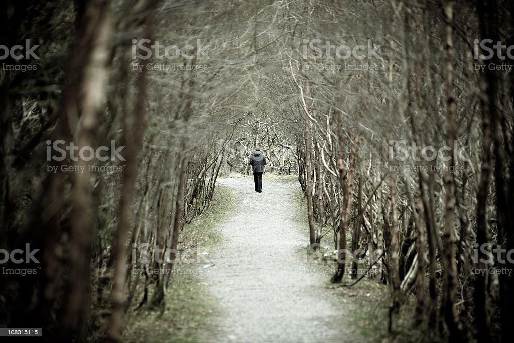 Trail through the woods in Glenda Lough, Ireland royalty-free stock photo