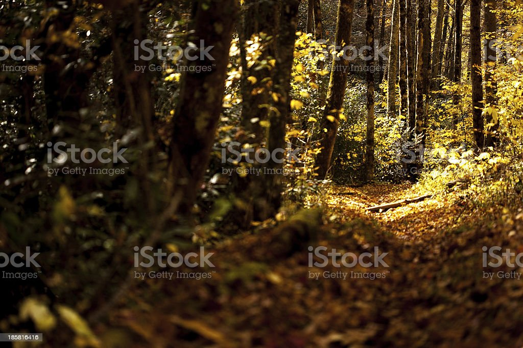 Trail Through the Woods. royalty-free stock photo
