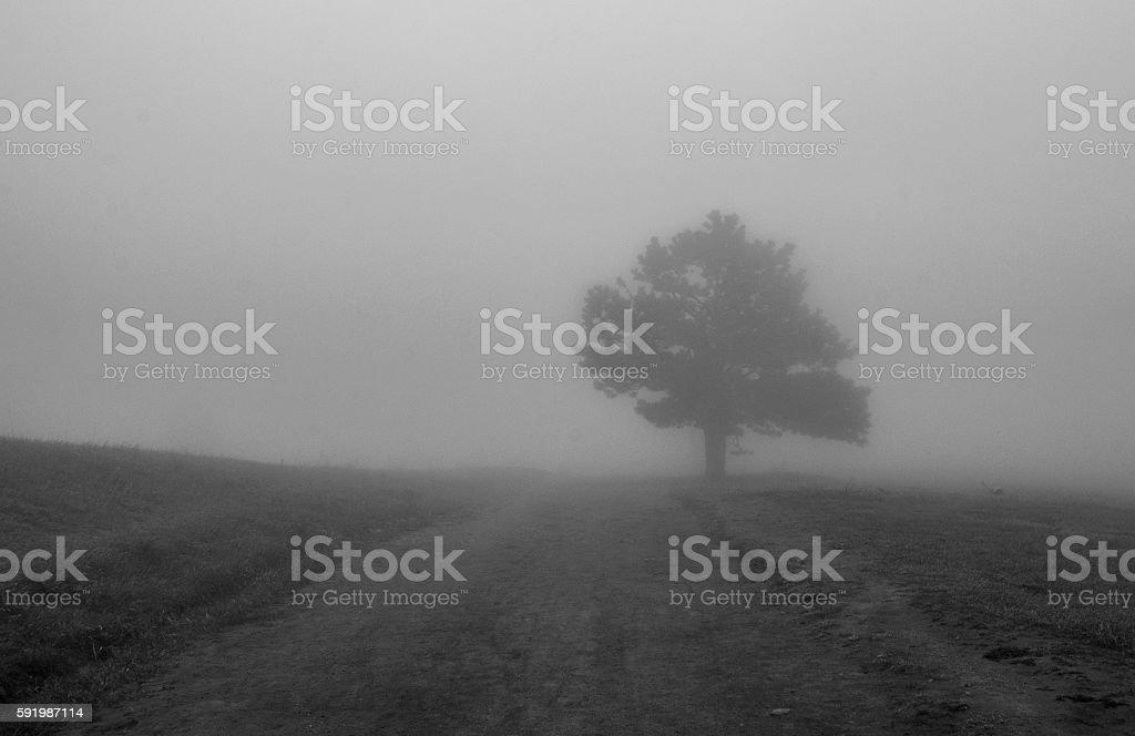 Trail through Thick Fog stock photo