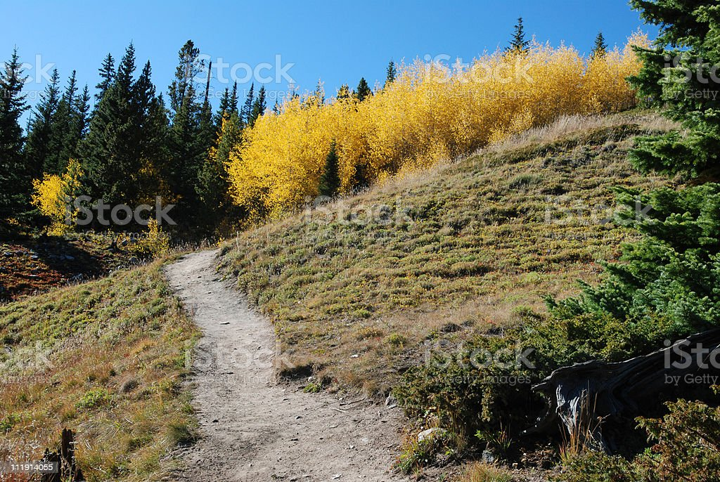 Trail to an Aspen Grove royalty-free stock photo