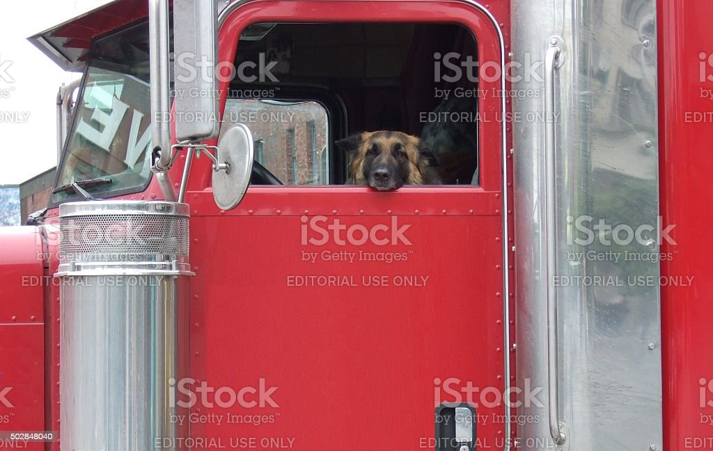 Trailer and a dog stock photo