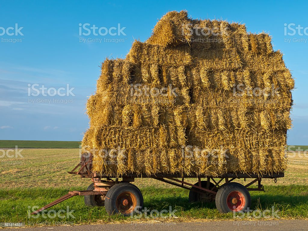 Trailer with Hay stock photo