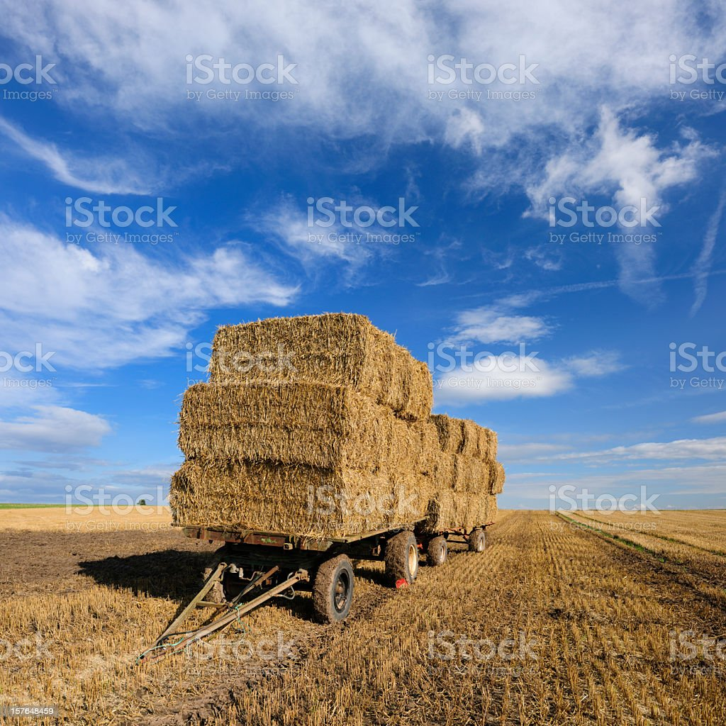 Trailer with Straw Bales in Field Stubble Landscape royalty-free stock photo