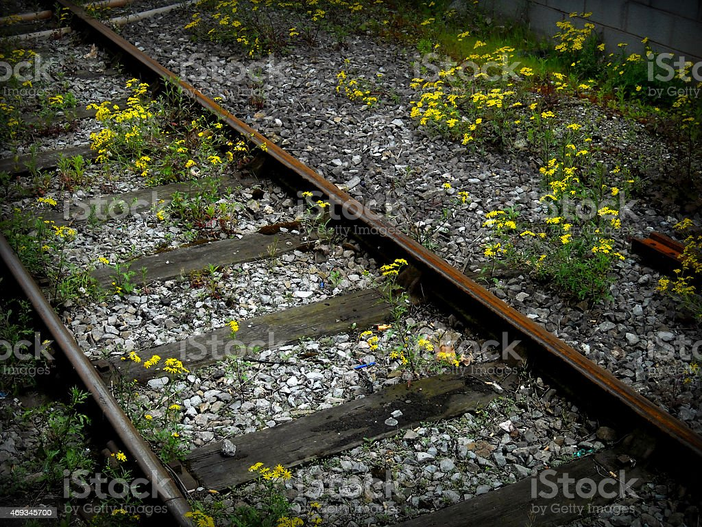 Train Tracks with Rocks and Flowers stock photo
