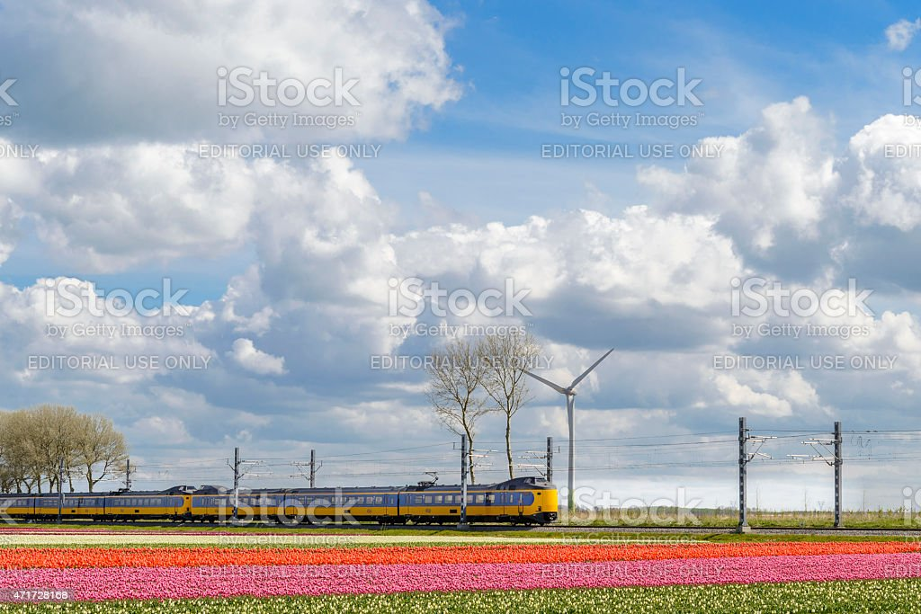 NS Train with Tulip fields on a beautiful spring day stock photo