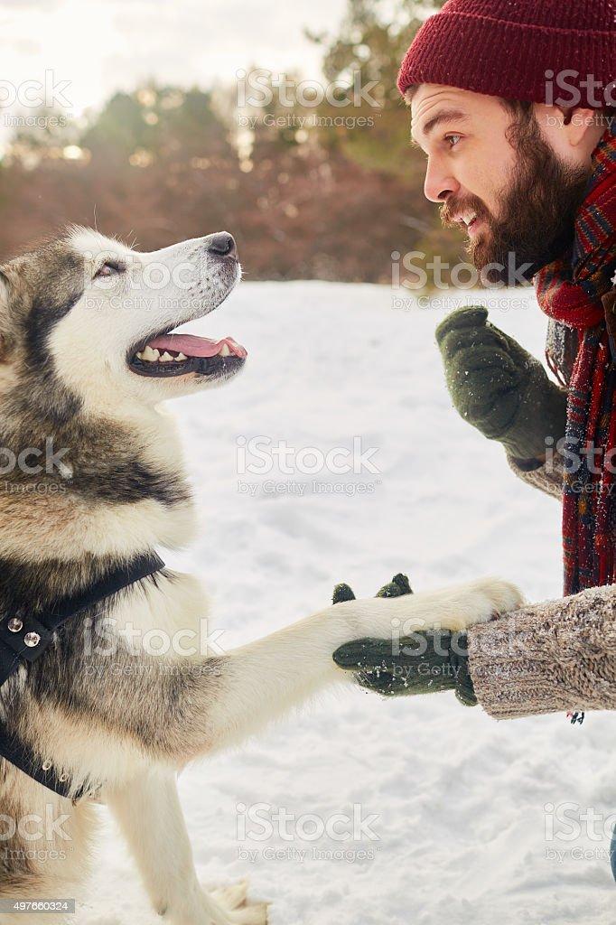 Trained dog stock photo