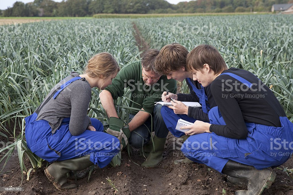 Trainee at field with leeks royalty-free stock photo