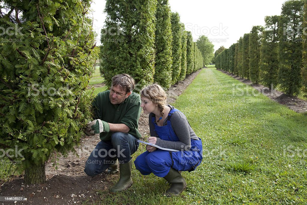 Trainee at formal garden stock photo