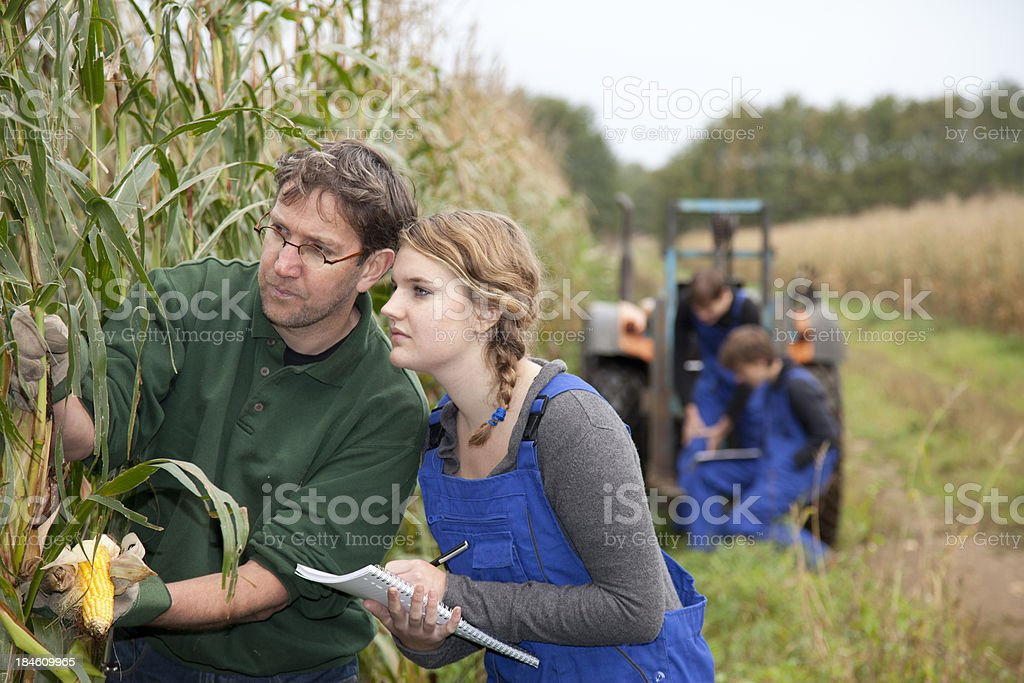Trainee learning for farmer royalty-free stock photo