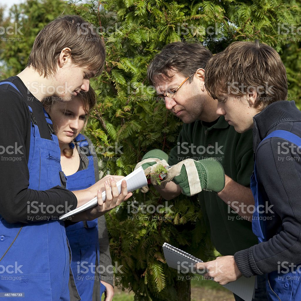 Trainee learning for gardener. royalty-free stock photo