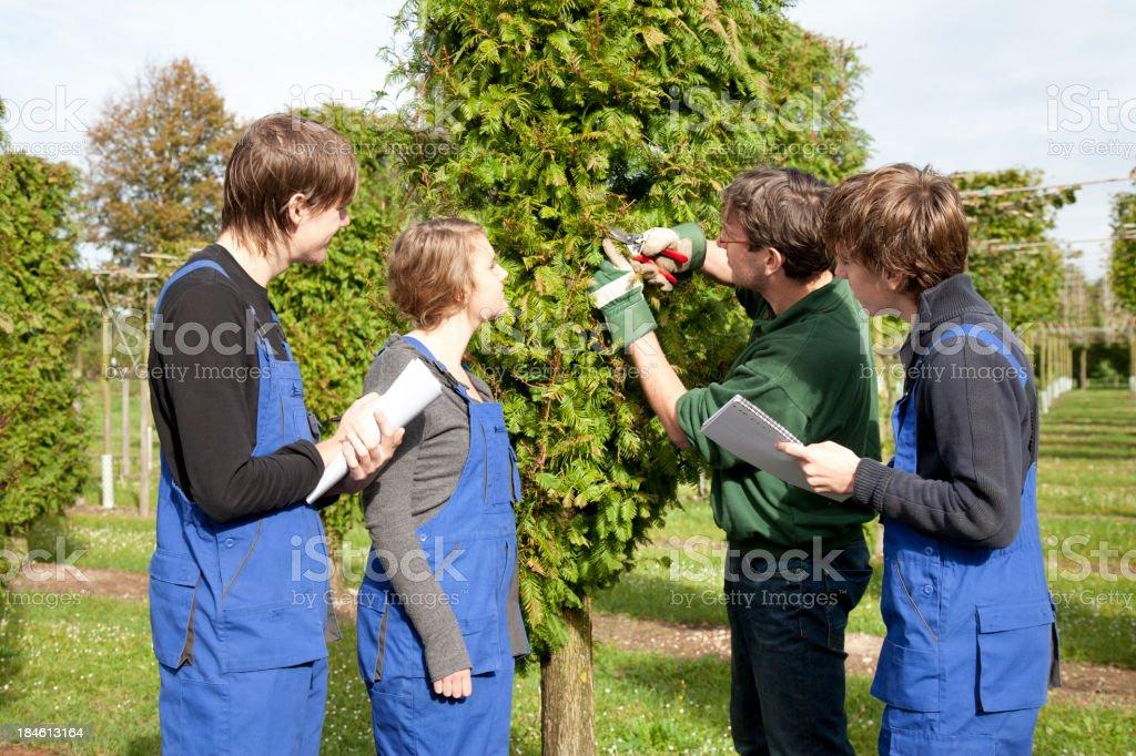 Trainee making notes. Tree Nursery. royalty-free stock photo