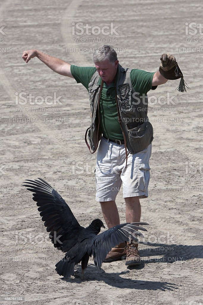 Trainer Performs Bird Show With Vulture royalty-free stock photo