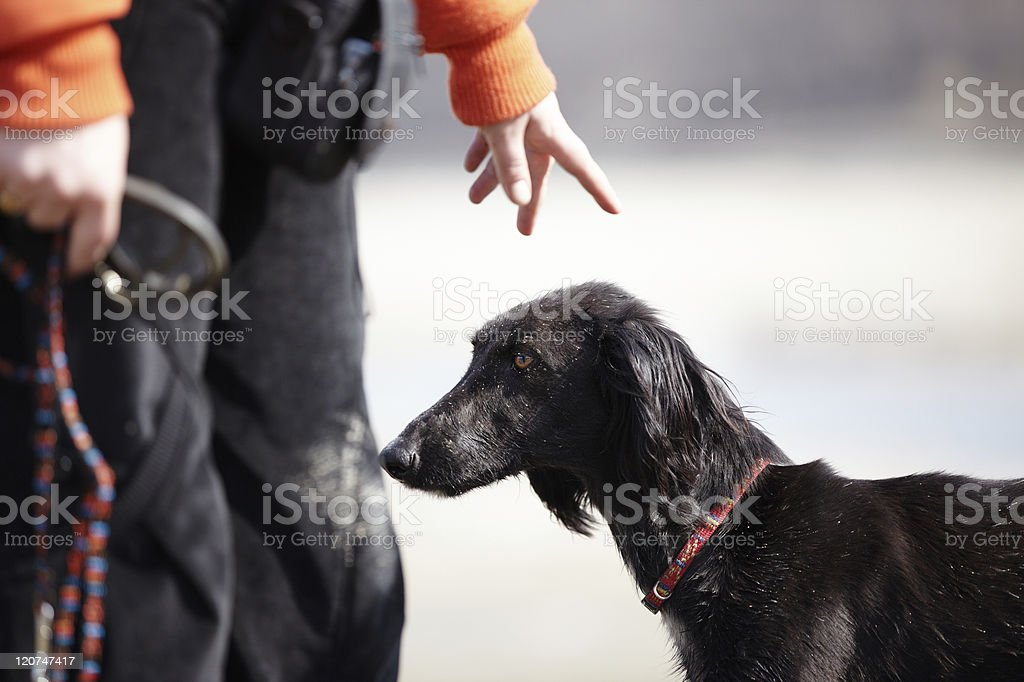Trainer pointing to dog and holding a leash stock photo