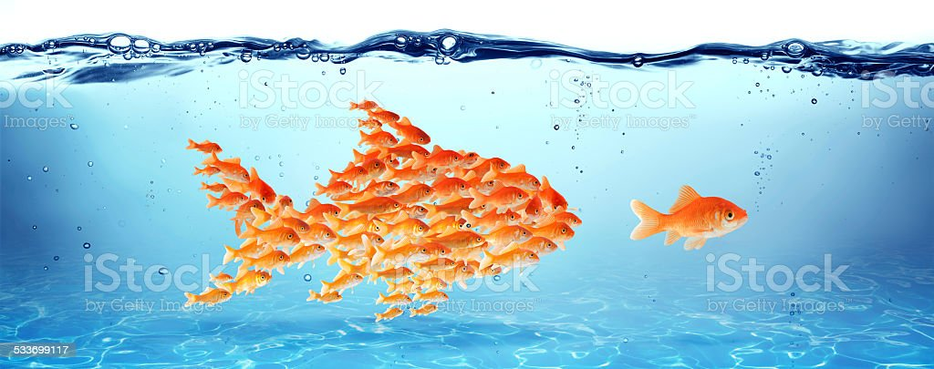 Training and education - goldfish in water: teacher and scool stock photo